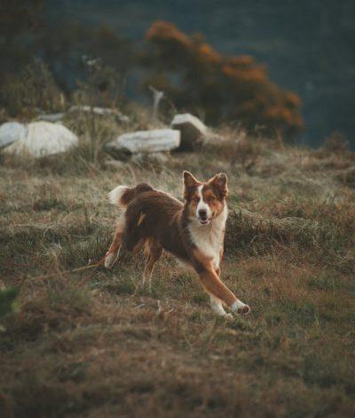 Jak ułatwić sobie trening z psem? Zainteresuj się akcesoriami treningowymi dla psów