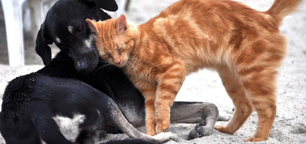 Pies z kotem pod jednym dachem – czy to możliwe?