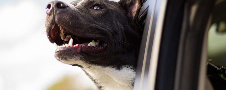 Koc, poduszka czy buda – jak urządzić legowisko dla psa?