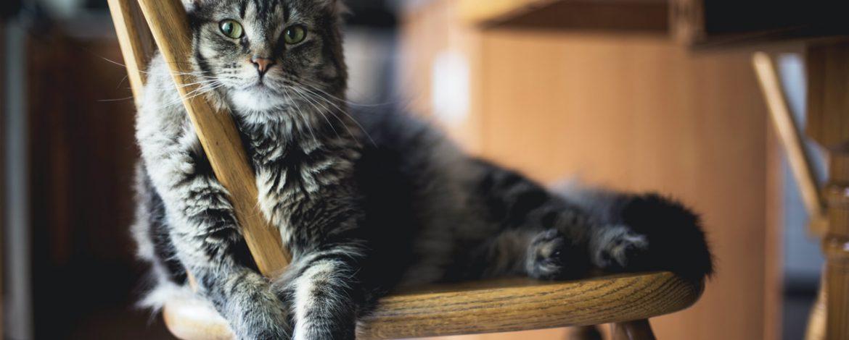 Jak nazwać kota?